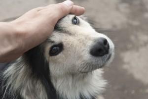 aaien-hond